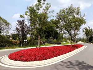 黄龙溪谷物业绿化
